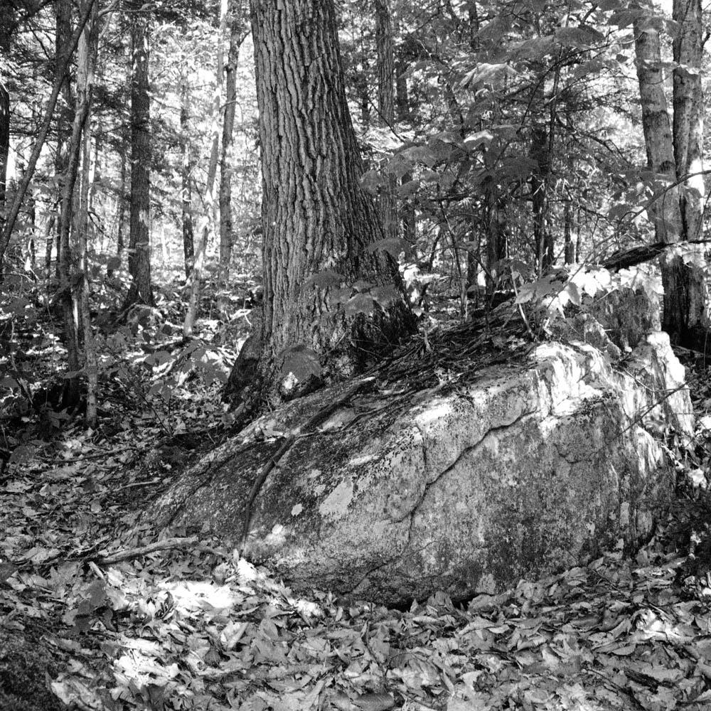 Untitled Woods