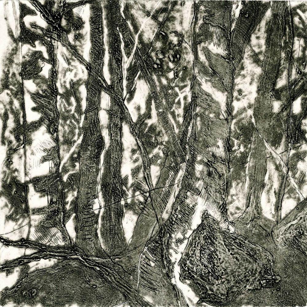 Woods Interior, #1, Suite of 4 prints