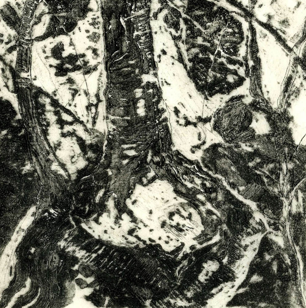 Woods Interior, #3, Suite of 4 prints