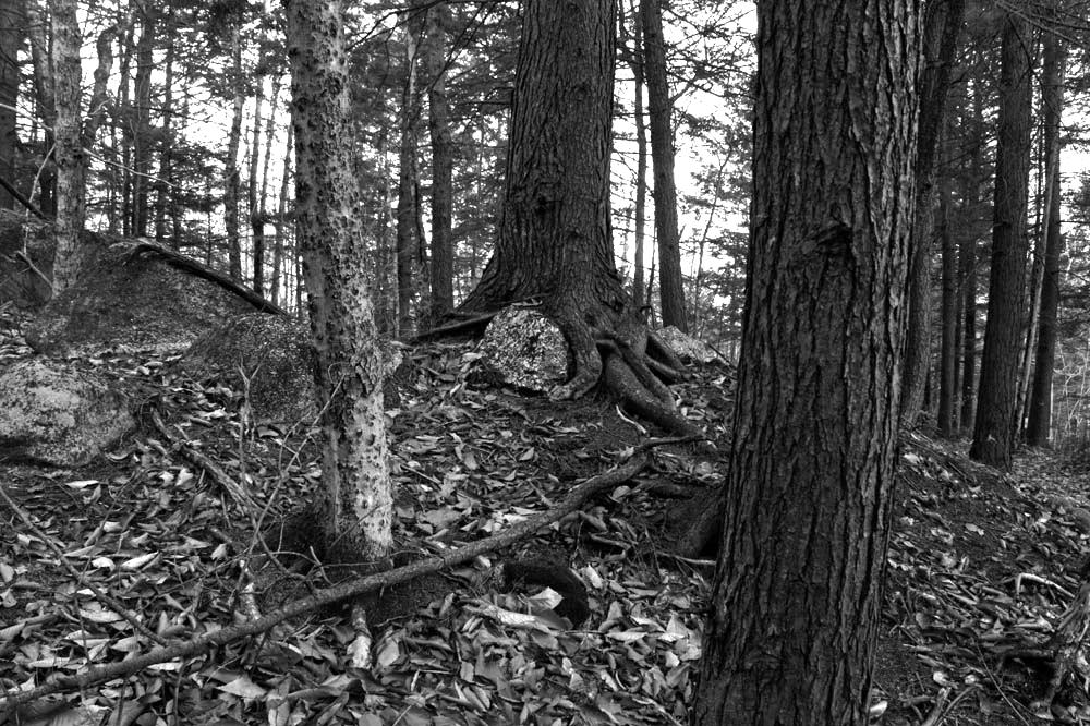 Untitled Woods, November