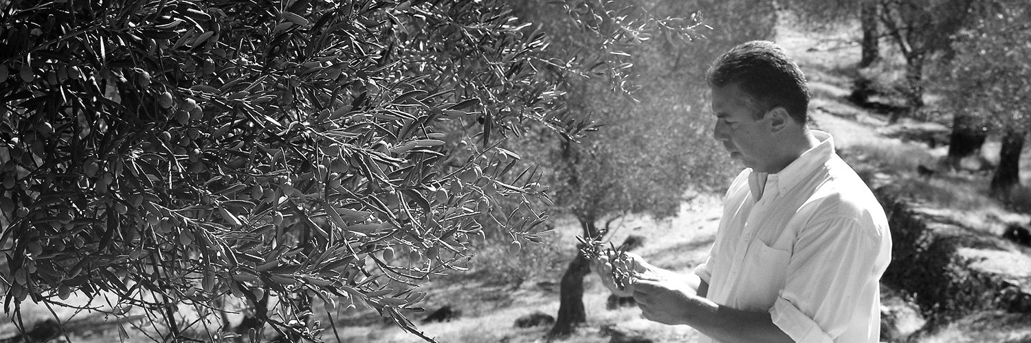Mihalis Tzortzis with his olive trees