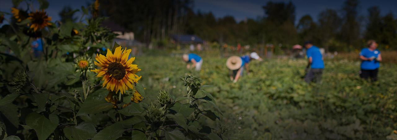 A photo of 21 Acres' farm. Courtesy of 21 Acres.