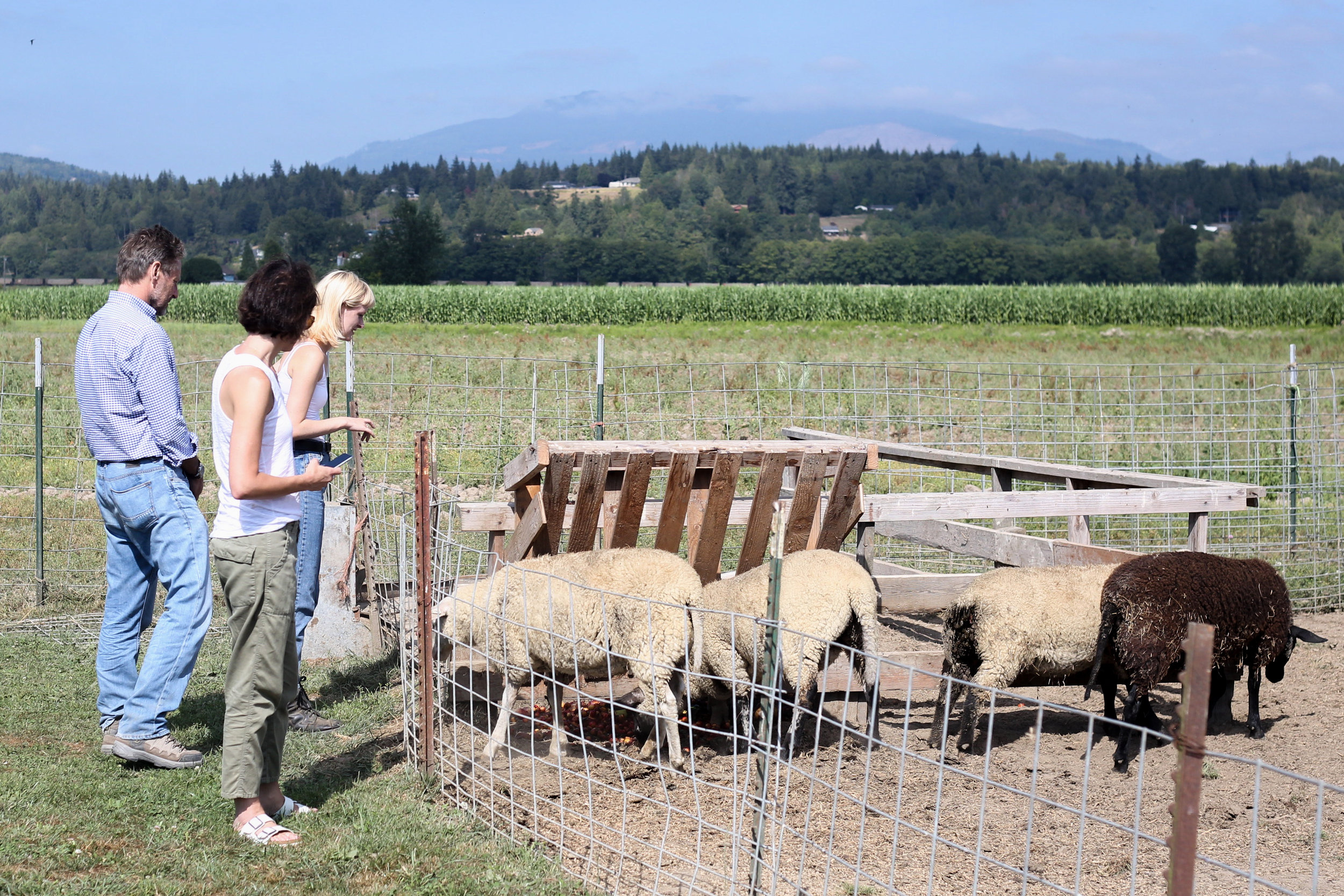 Visiting with the sheep and pigs at Samish Bay Cheese was one of the best parts of the trip.