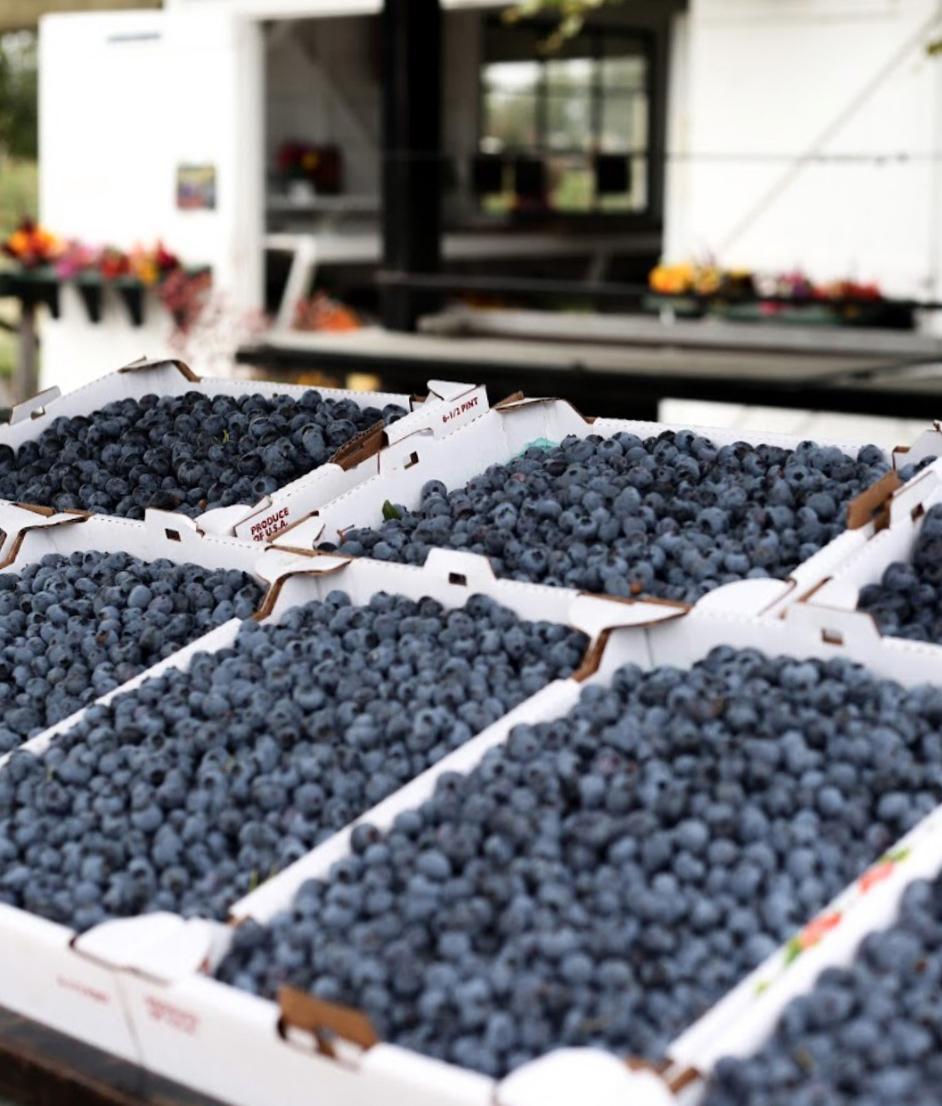 Some fresh blueberries from Hedlin's Family Farm!