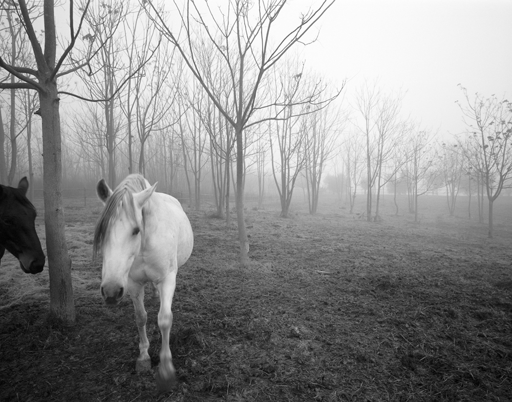 The Darkside of a Horse