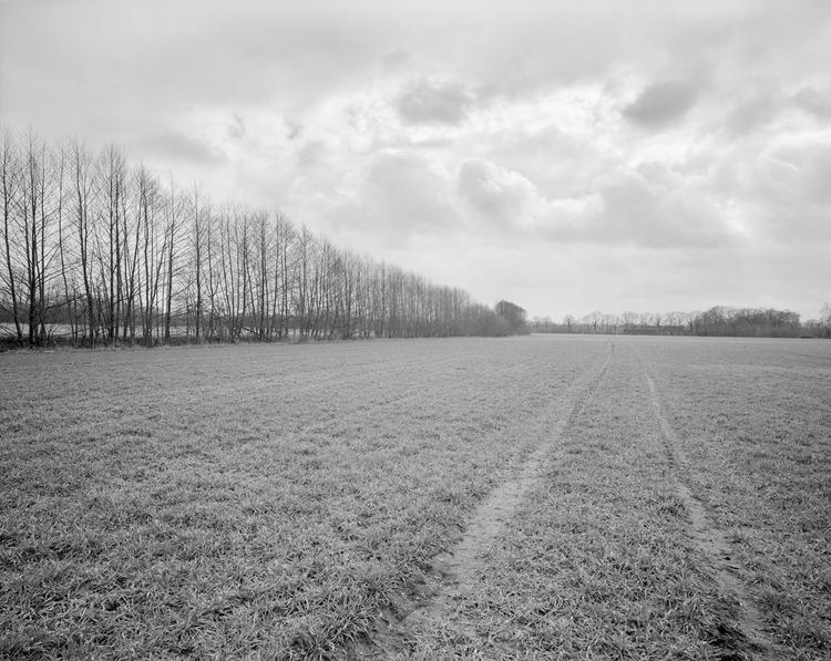 Wittmann Fields