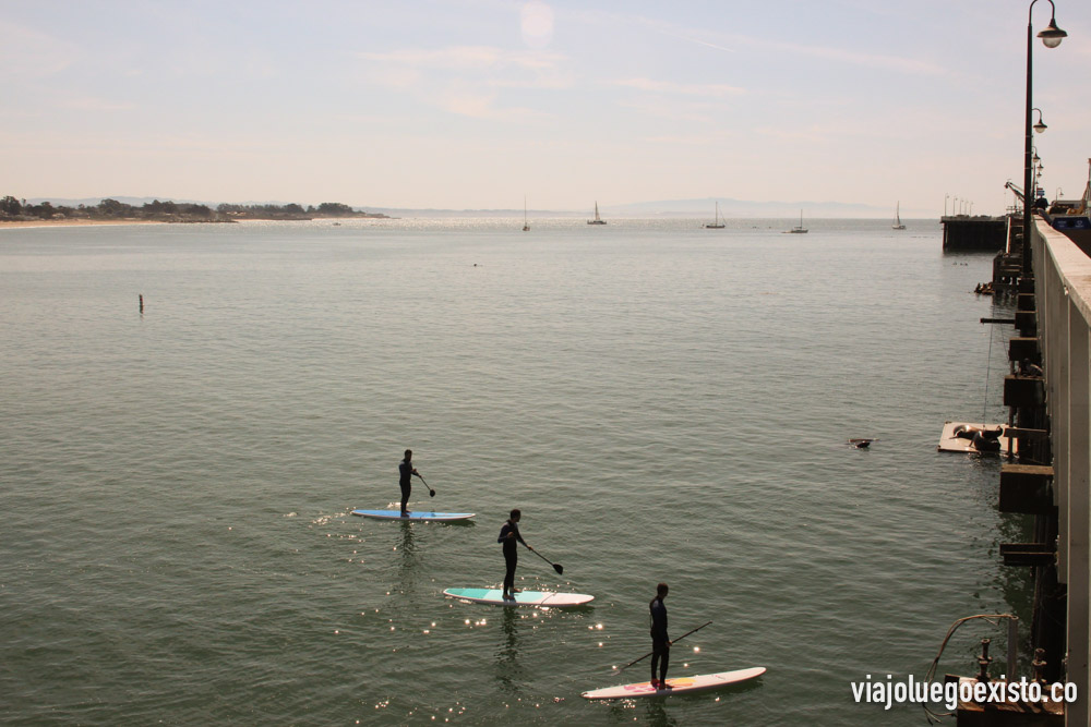 Haciendo paddle surf entre leones marinos