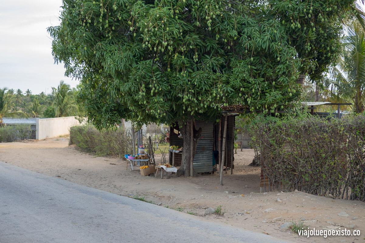 Cuando fuimos a Vilanculos (octubre o noviembre) era época de mangos, y había infindad de árboles como éste repletos de mangos, y cantidad de puestos donde los locales los venden