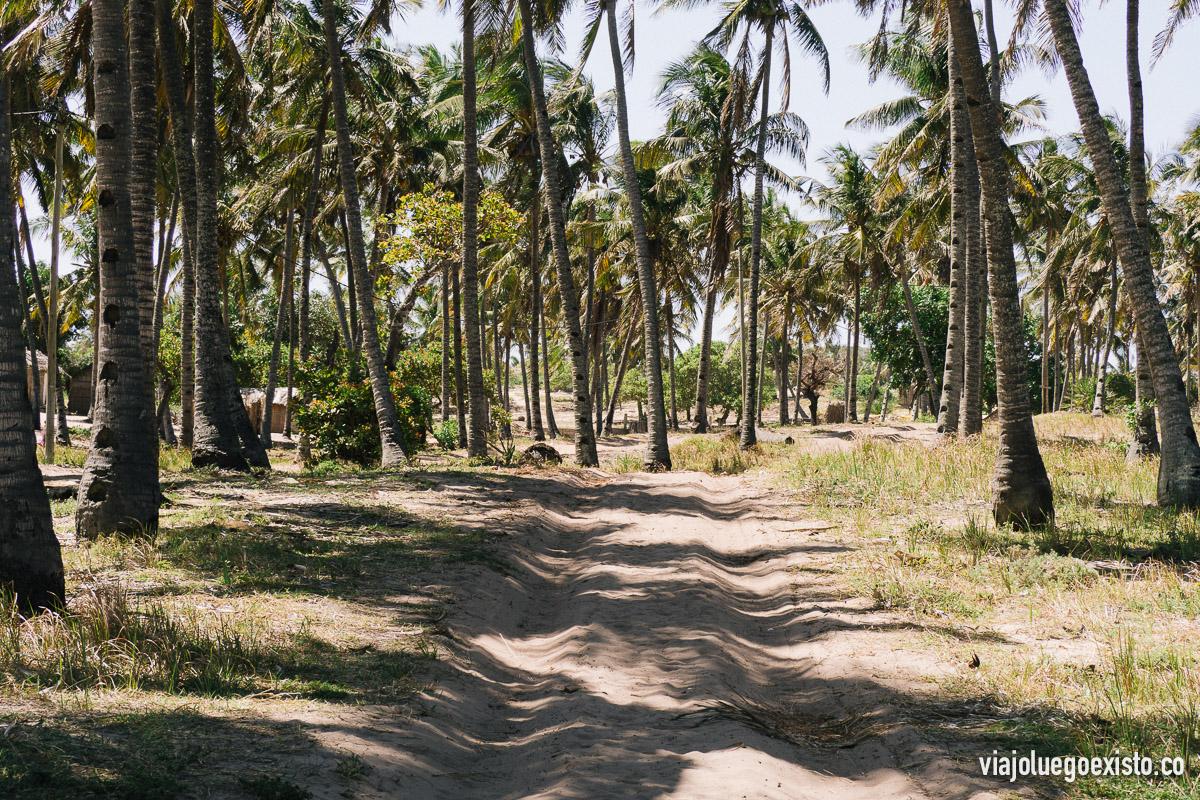 Un mar de palmeras en los caminos a las afueras de Tofo.