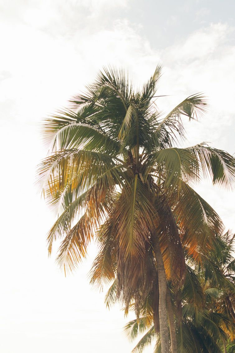 puerto-rico-1.jpg