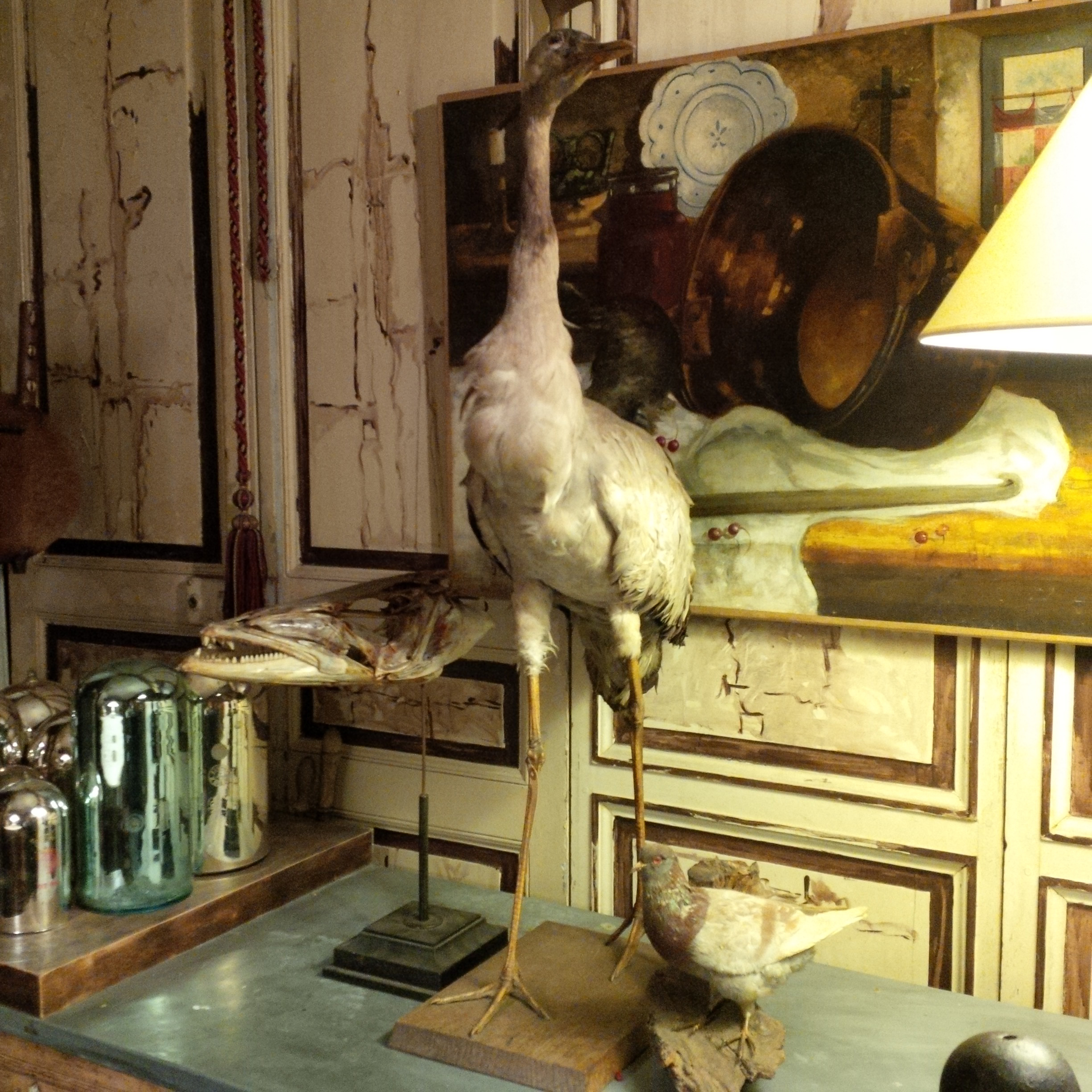 Taxidermy at Les Puces de Saint-Ouen