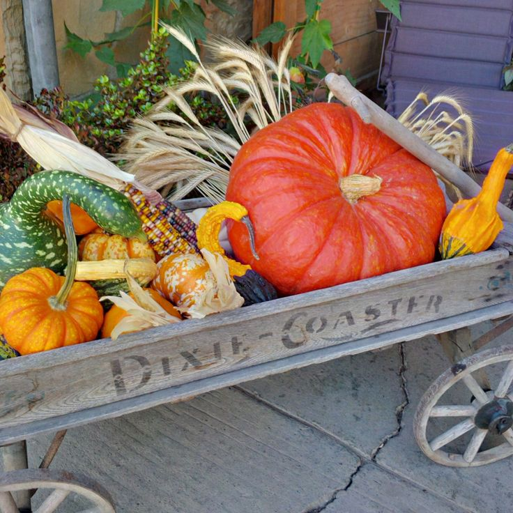 Fall bounty has never looked so good as in a wagon.