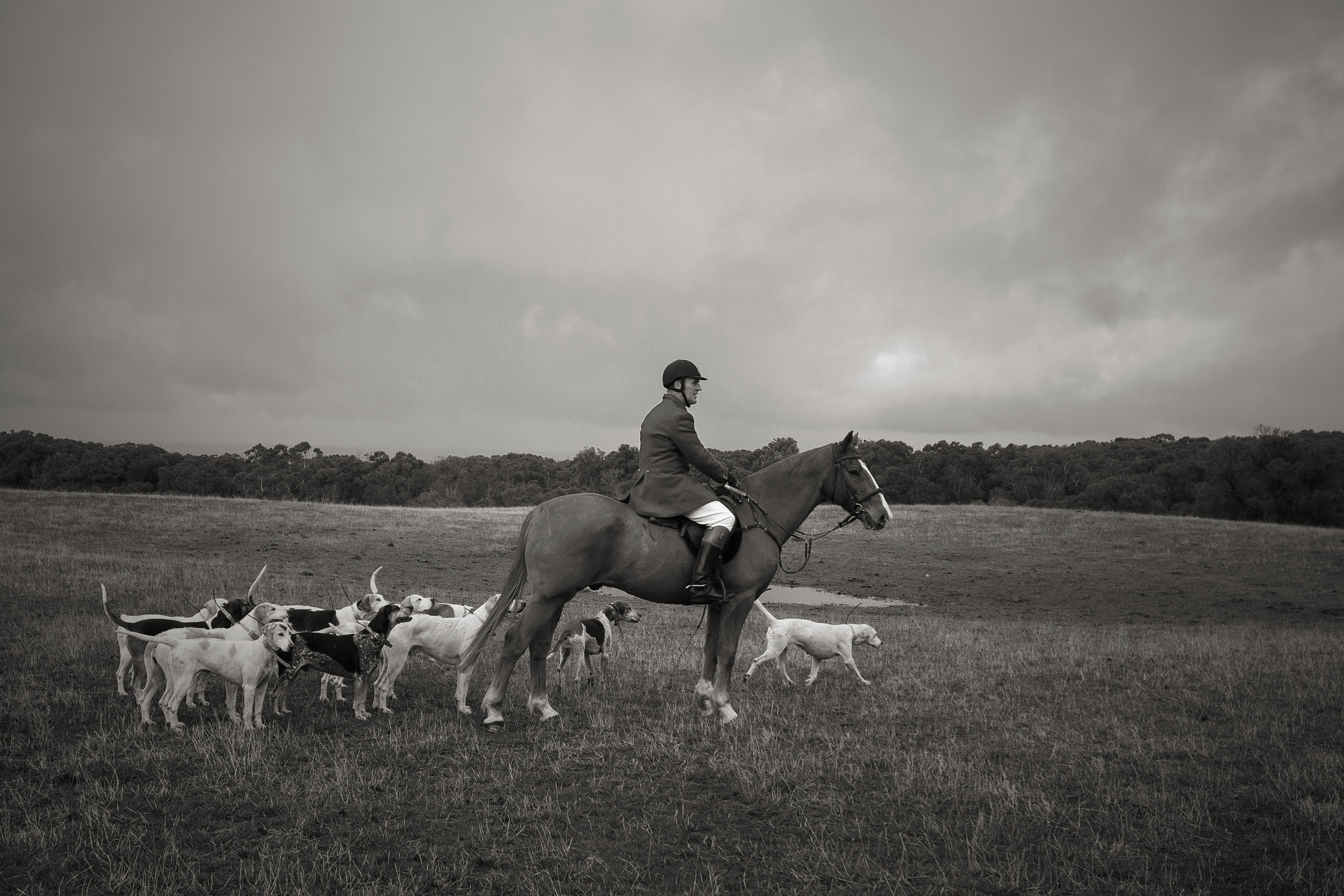 The Hunt Master and his Hounds, about to open the hunt.
