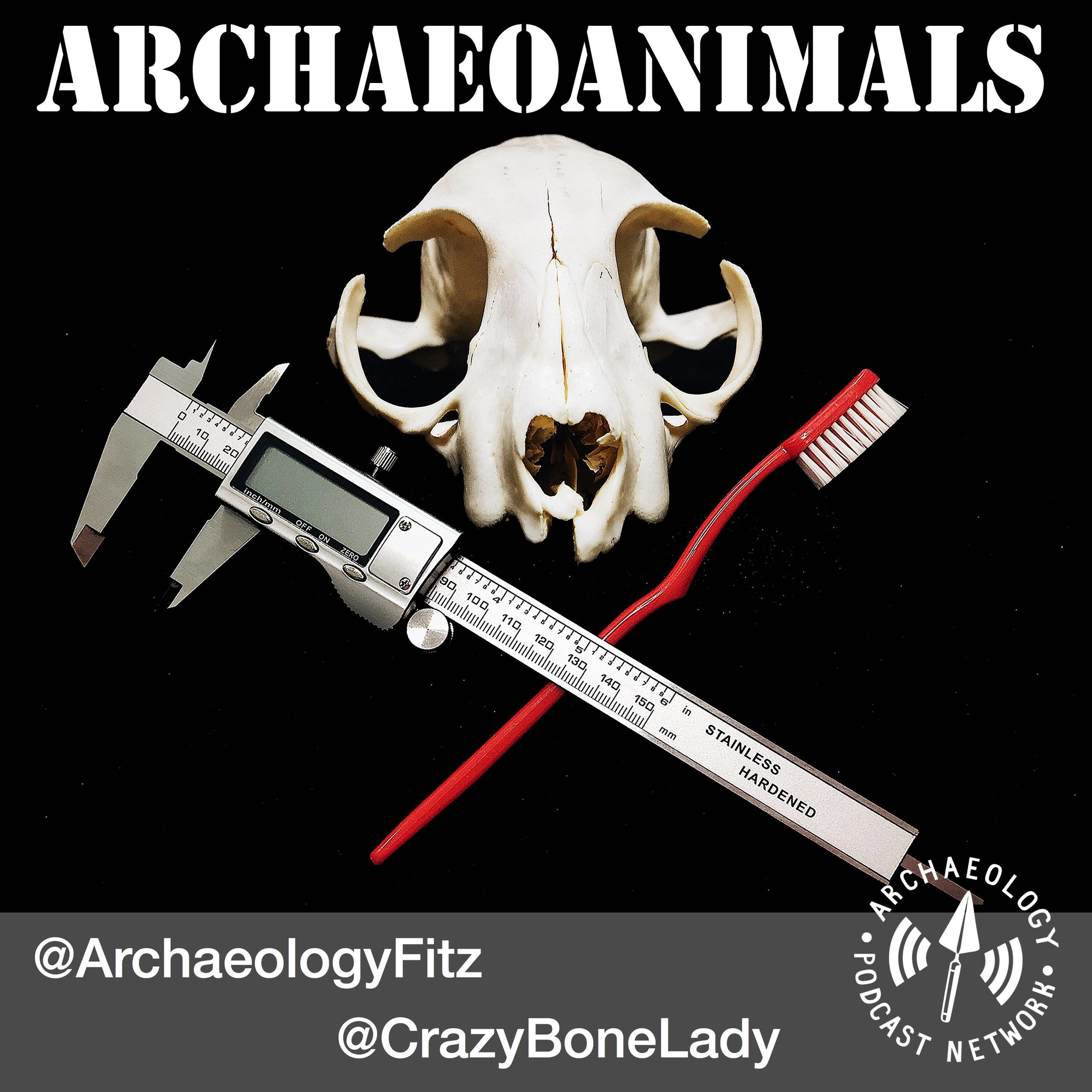 Zooarchaeology and Animals.jpg