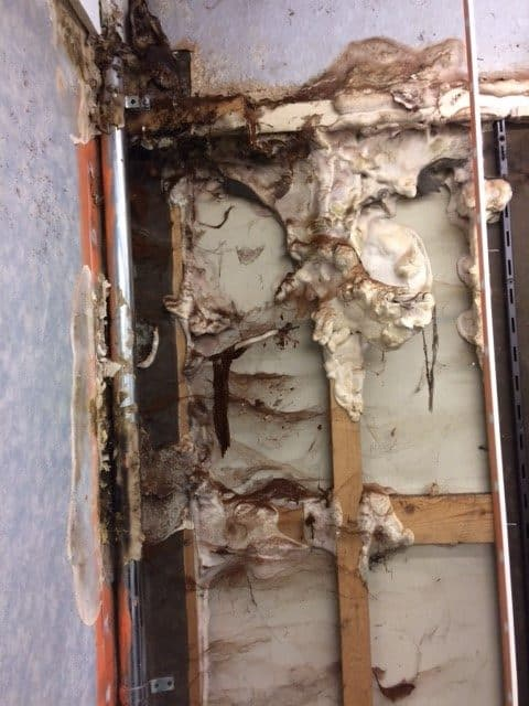 Signs of Dry Rot.jpg