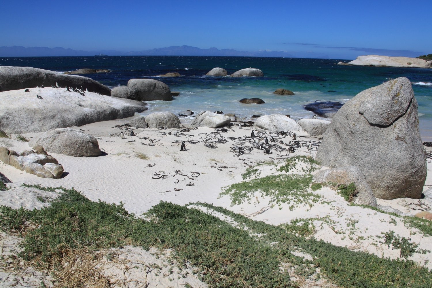 Penguin's Bay!    The Boulders Beach Penguin Colony is located close to the seaside village of Simons Town. South Africa. 07 March 2012. 1/640 s, f/16, +1/3 EV, ISO 320, 28 mm, EOS 5D Mark II + EF 28-300 L