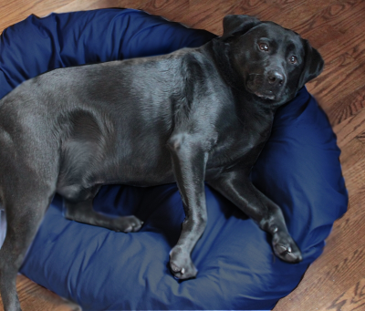 This dog seems to have outgrown his bed or should he go on a diet?