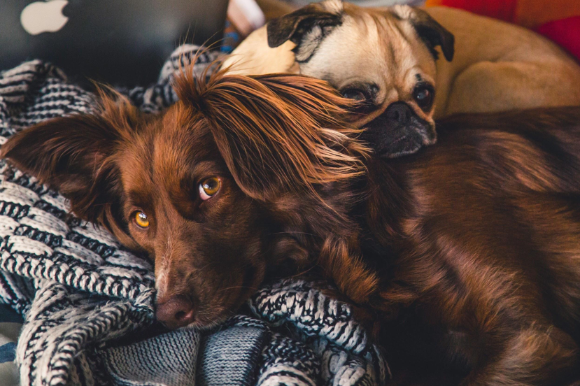Prospective Home Buyers Will Prefer Homes Without Pets