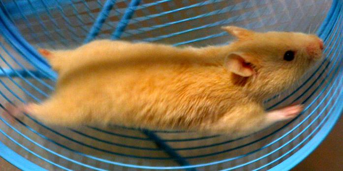 hamsterwheel.jpg