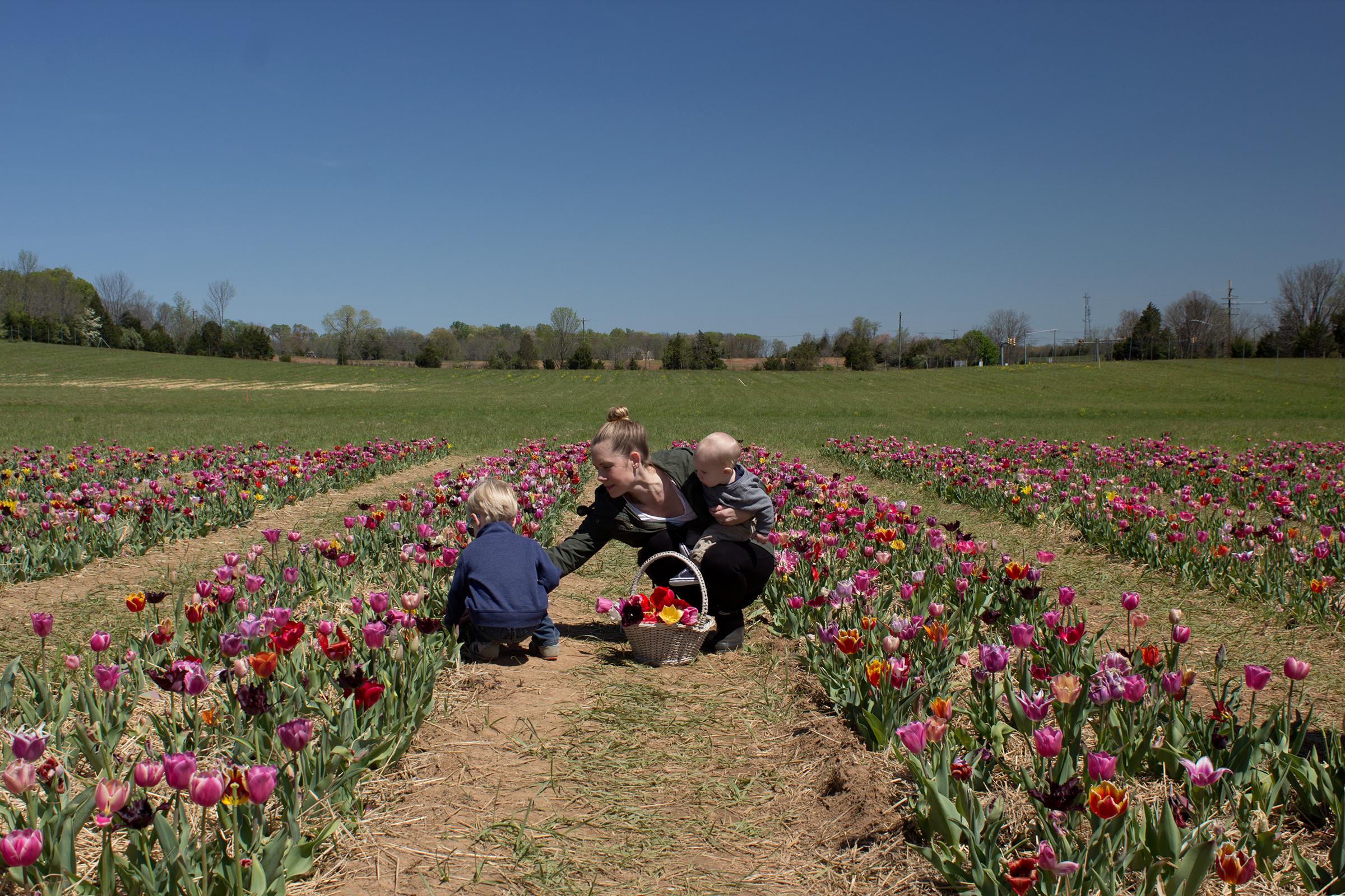 burnside-farms-tulips-nora-knox.png