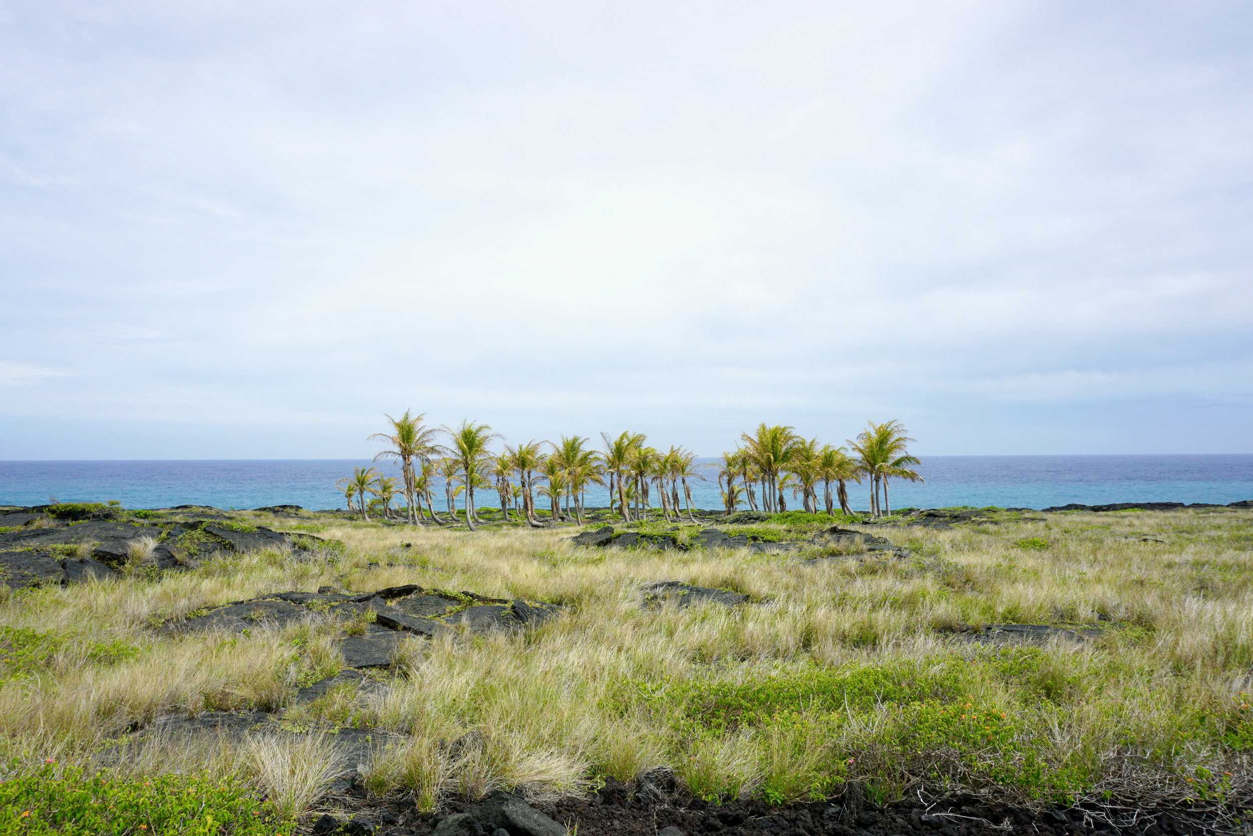 volcanoe-national-park-palm-trees-nora-knox.jpg