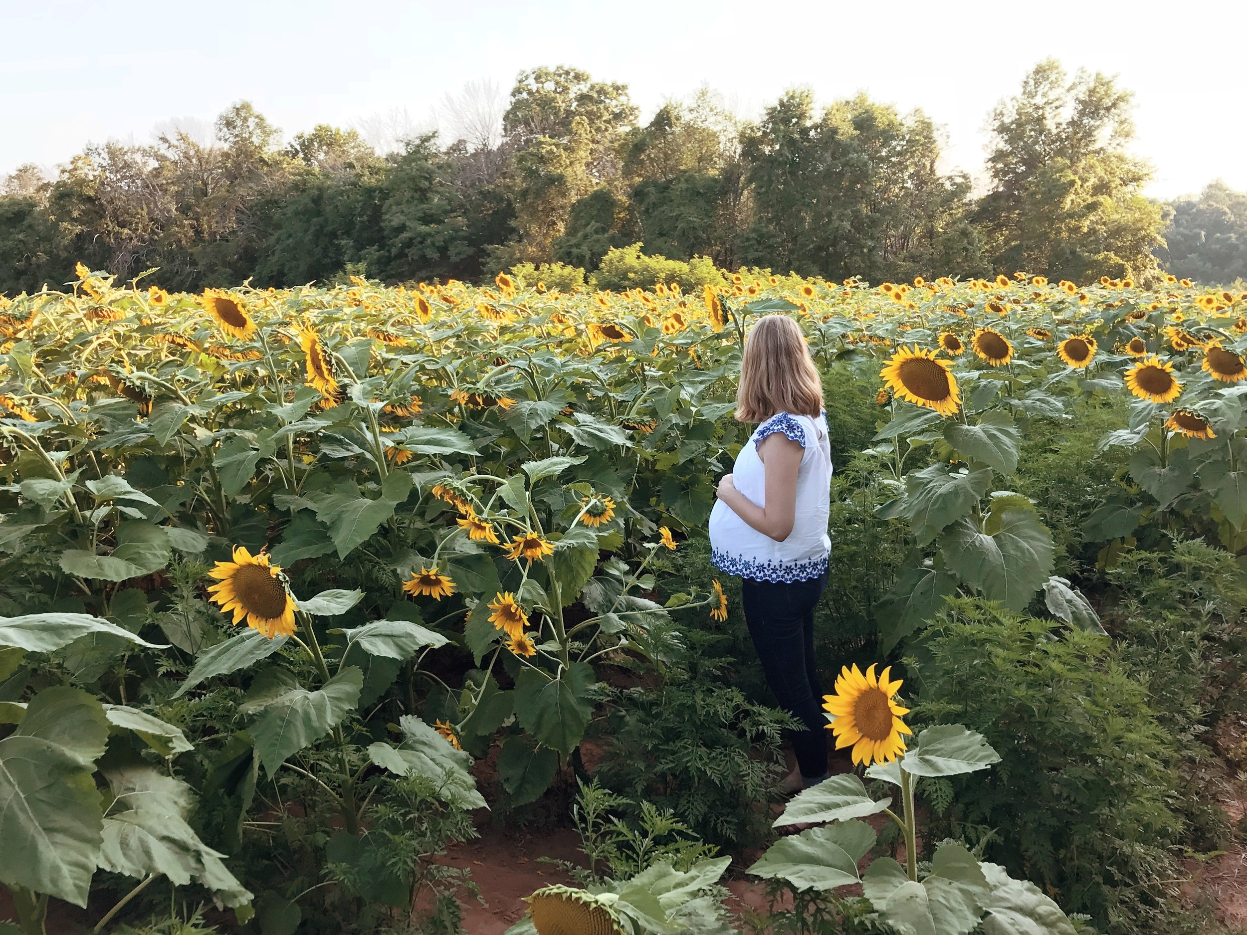 sunflowers-nora-knox.jpg