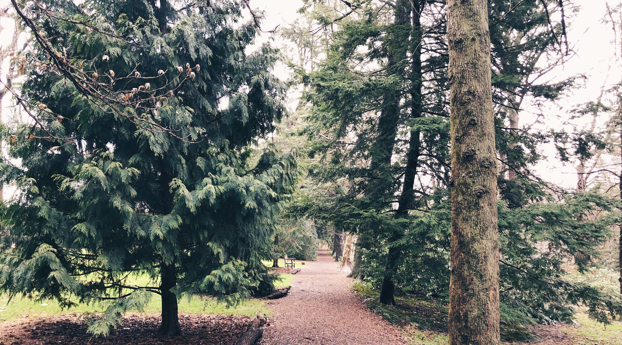 longwood-gardens-forest-nora-knox.jpeg