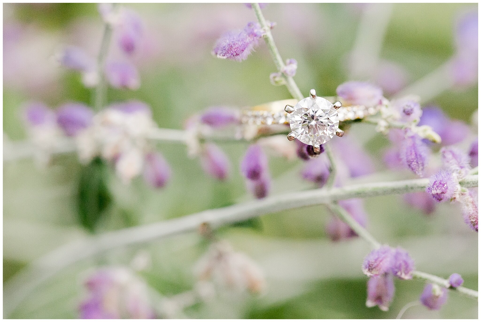 period_park_engagement_session_madison_wisconsin_wedding_photographers_0184.jpg