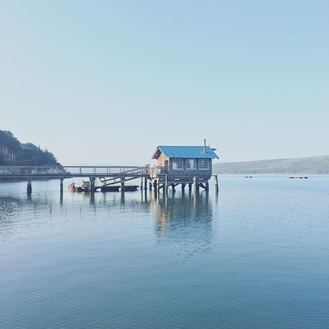 Morning on Tomales Bay