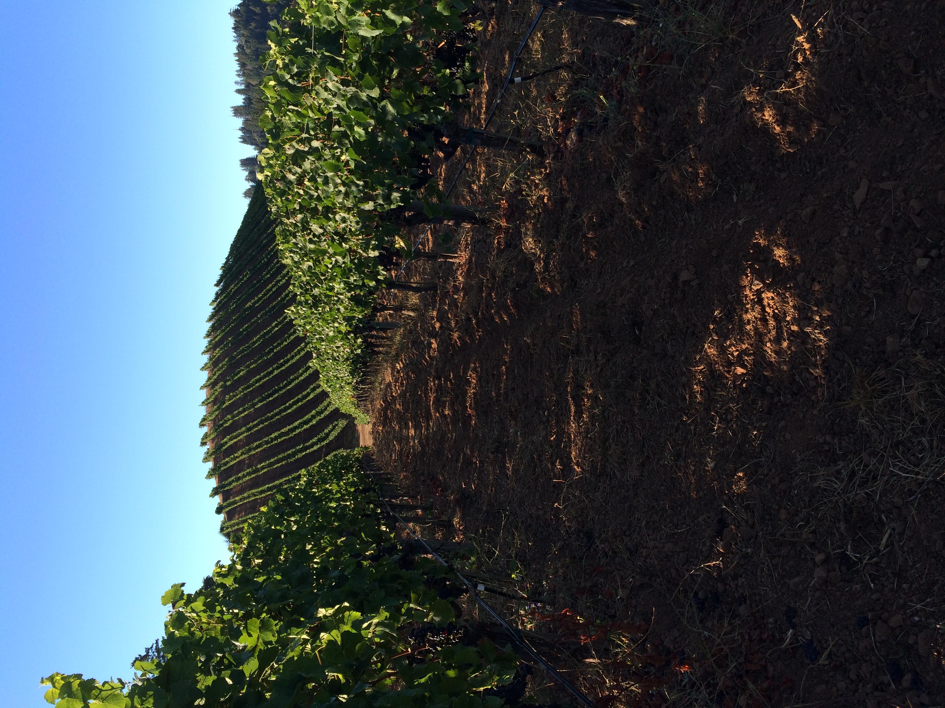 Hirsch Block 8 hillside view.JPG
