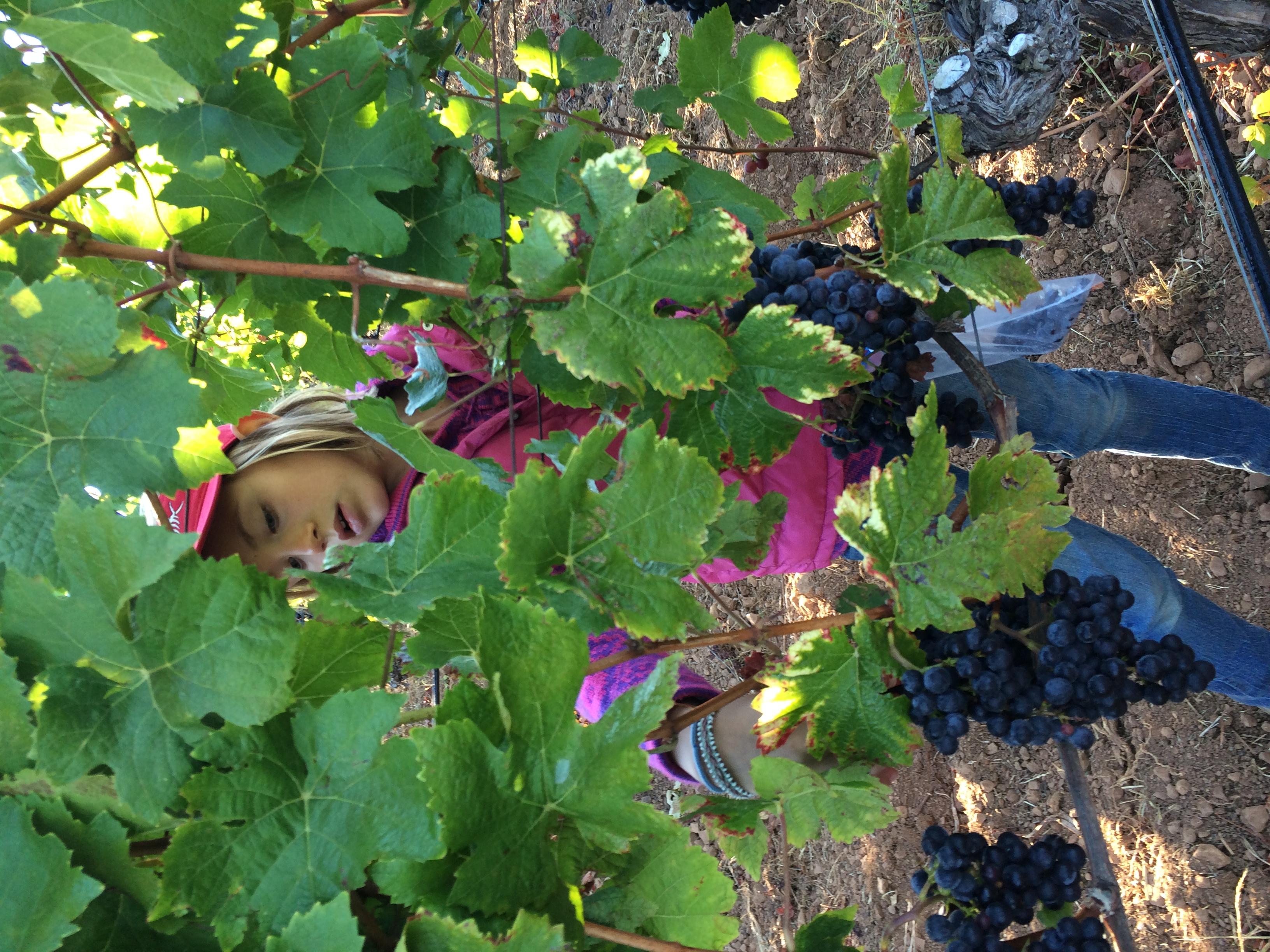 Hirsch Block 8 Vivien through the vines.JPG