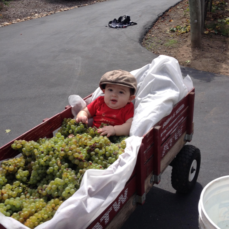 Grandson Mason already helping with harvest...