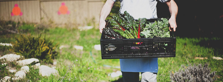 french bread gardener carrying lettuce.PNG