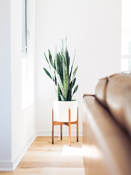 Andrea Fenise Memphis Fashion Blogger shares inspiration to decorate with house plants