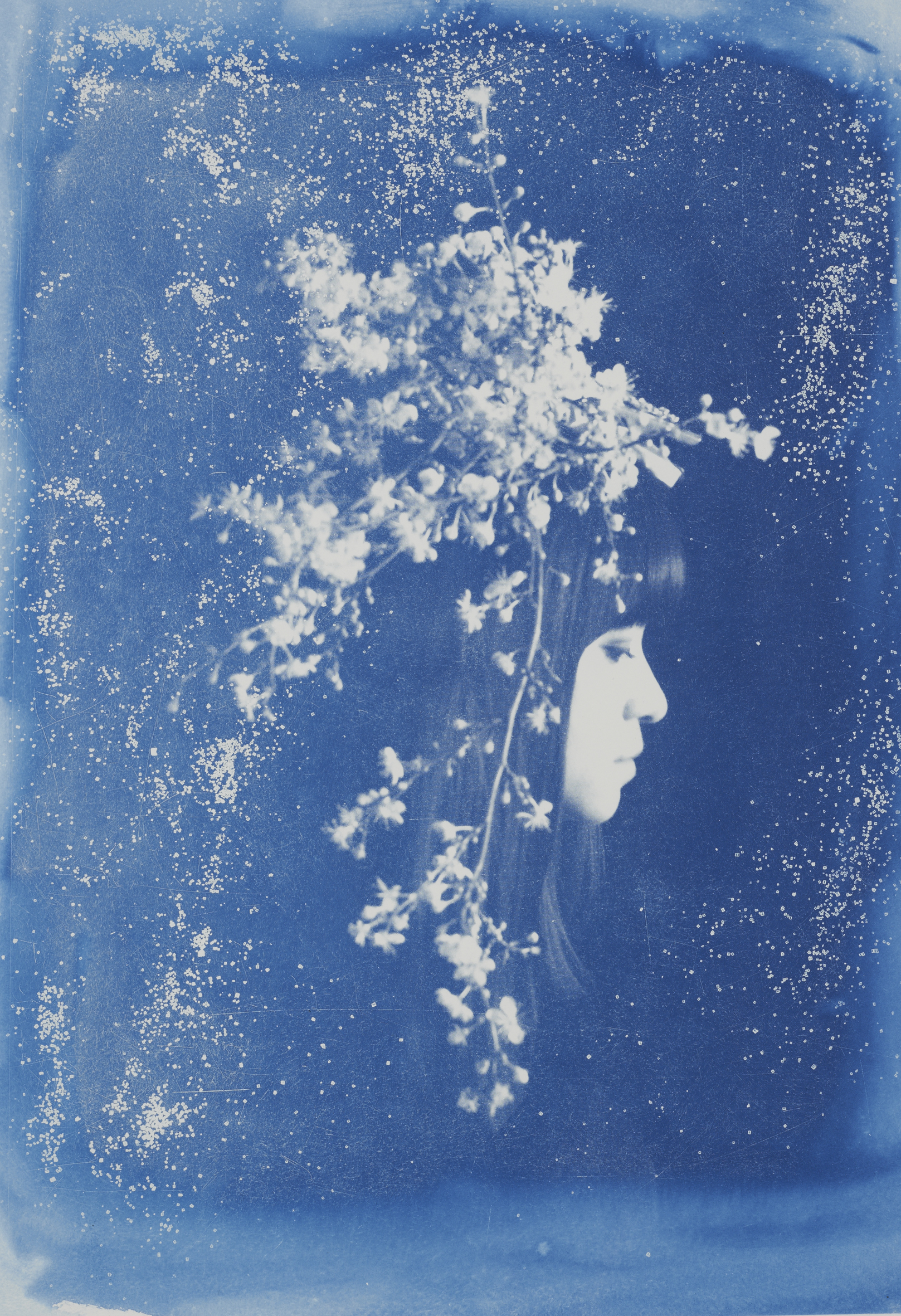 "Capella  – Ed. 3 of 5 Cyanotype on paper, framed Artwork: 24"" x 17"" / 62 x 42 cm 2014"
