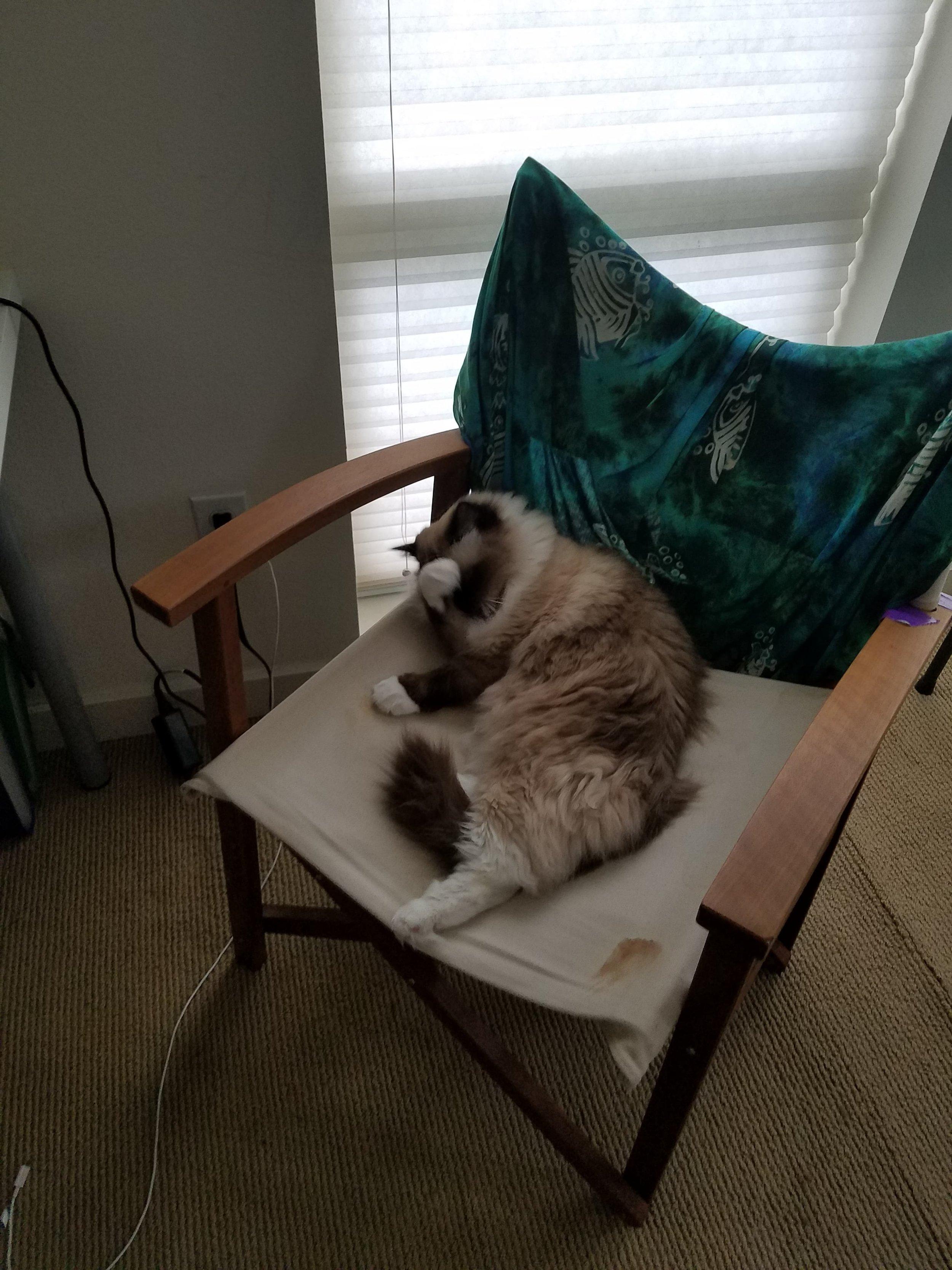 Cordelia on Chair.jpg