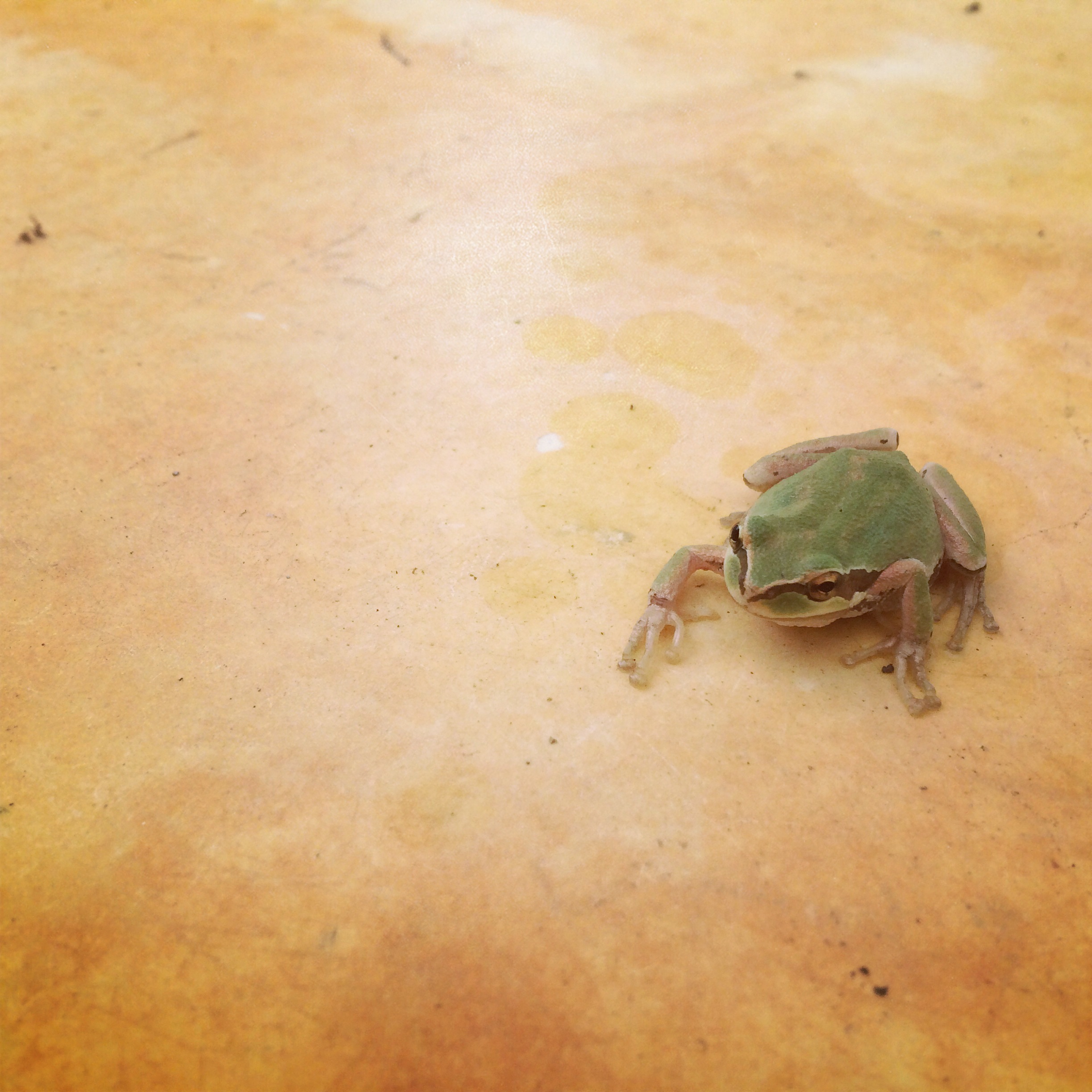 A froggy friend in the wash station.