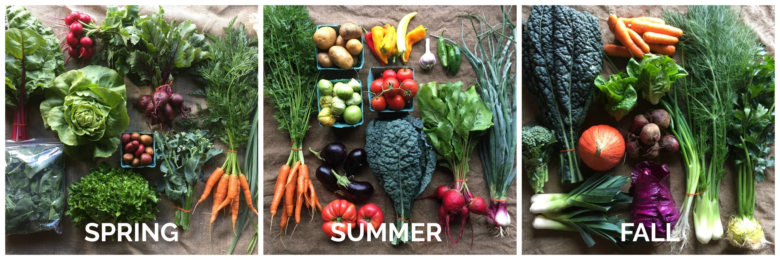 NOTE: these images are not representative of share size.  They do show you what kinds of veggies you are likely to see in your shares across the seasons!