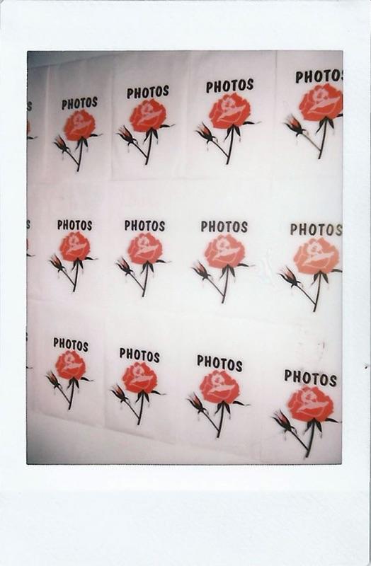 0221_Roses.jpg.jpeg