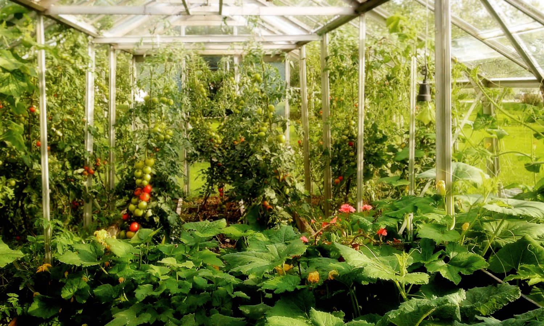 I skolträdgården finns två växthus, där barnen under skoltidodlar sådant som är ätbart. Detta används sedan på mellanmålet i skolan och delas även ut till elevhemmen. Att plocka och äta detman odlat själv är en helt annan upplevelse än att äta något som kommer frånaffären. Alla blommor ovan växer ocksåi skolträdgården.