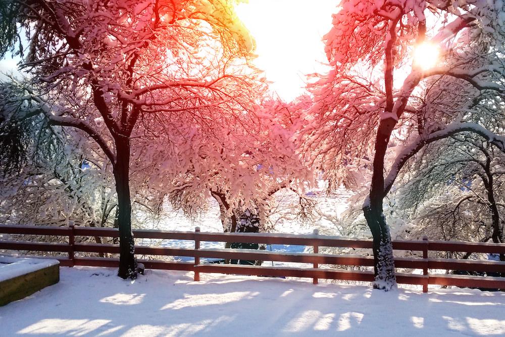 Även om det är skönt att vara inne på vintern, så kan det också vara fint i naturen, särskilt om det är vackert väder. Många åker pulka i vårpulkabacke.