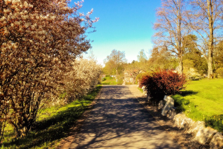 Varje dag märker man nya förändringar i naturen på Solberga då det är vår. Det är en av de stora fördelarna med att bo på landet, man lever med årstidens rytmer bara genom att promenera omkring.