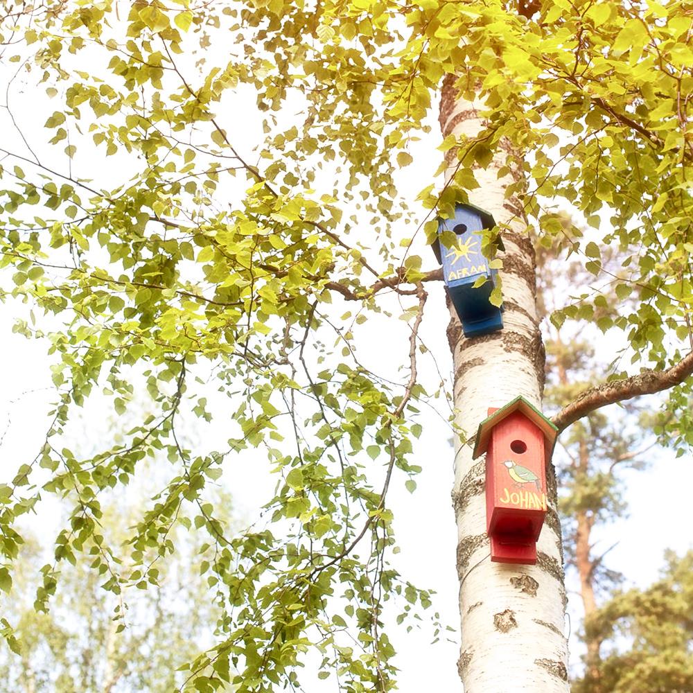 Med våren kommer djuren tillbaka.Flera elever har gjort fågelholkar som sitter nära skolan.
