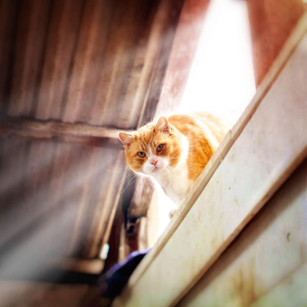 En del av djuren strövar fritt, man kan träffa på vår stallkatt Sune nere vid skolan.