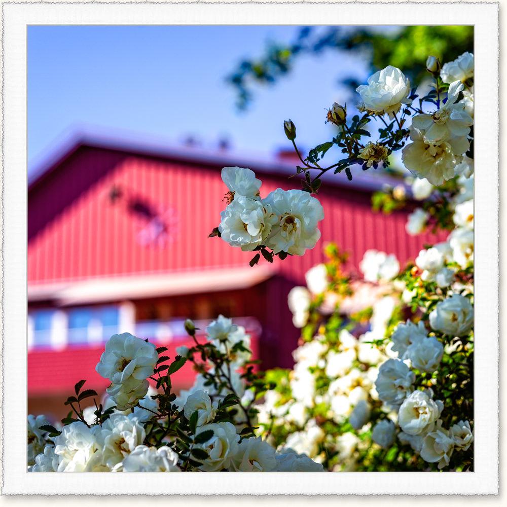 A._Om Solberga by+frame_04b.jpg