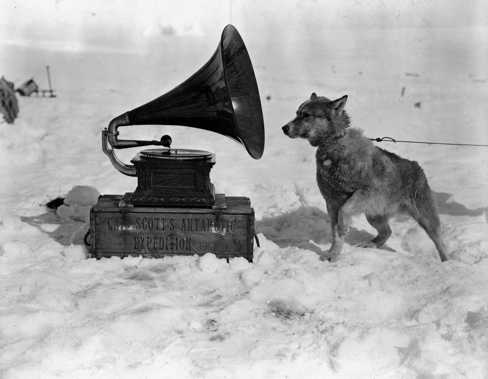 ponting_1911_dog_listening_to_gramophone_antartica-1.jpg