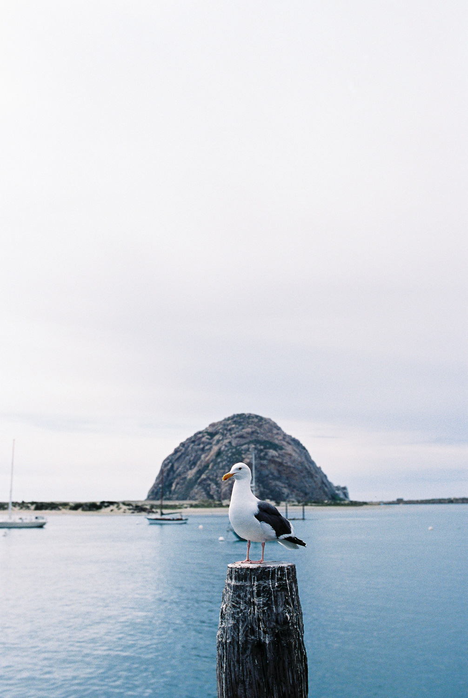 Big Sur Wedding Photographer-20.jpg