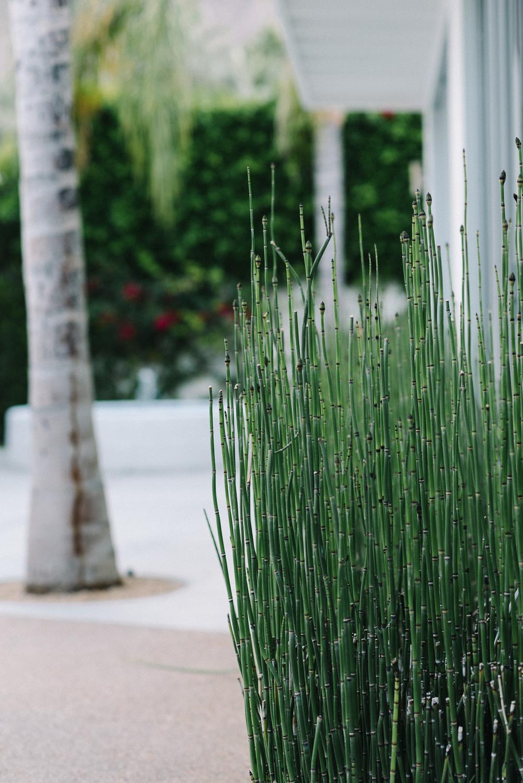 Palm Springs Wedding Honeymoon-7.jpg