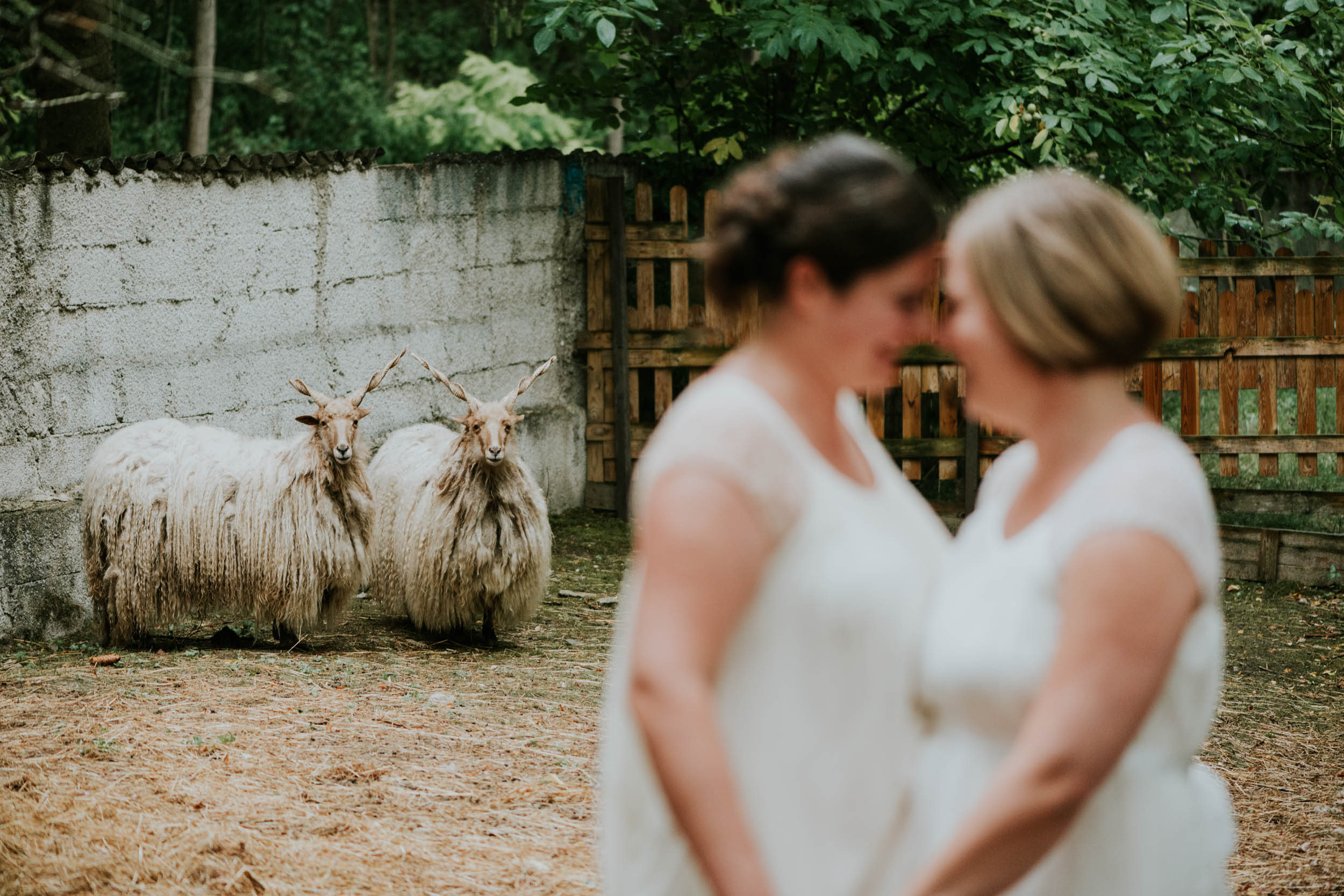 belle&sass_Stadtflucht sheep_understated_wedding-1.jpg