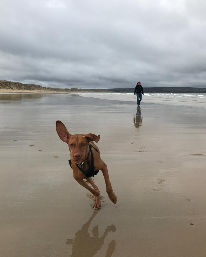 photo of Life Coach Georgie Muir's dog Rua running on beach